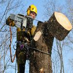 Спил и кронирование деревьев с помощью арбористики